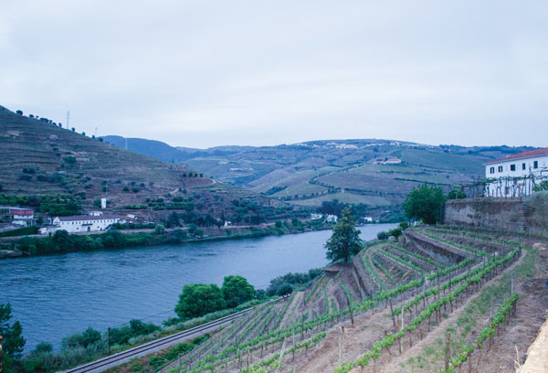 The exceptional vintages of 2011 from the Douro Valley