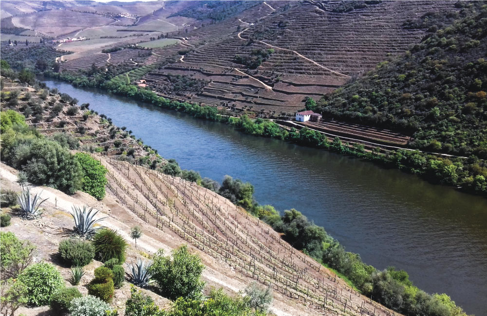 The Secrets of the Douro Valley